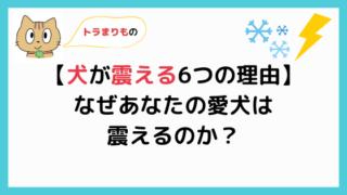 犬が震える6つの理由【対処法も解説!】