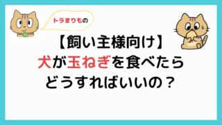 【飼い主様向け】犬が玉ねぎを食べたらどうすればいいの?