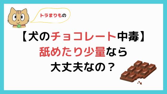 トラまりもの犬のチョコレート中毒舐めたり少量なら大丈夫なの?