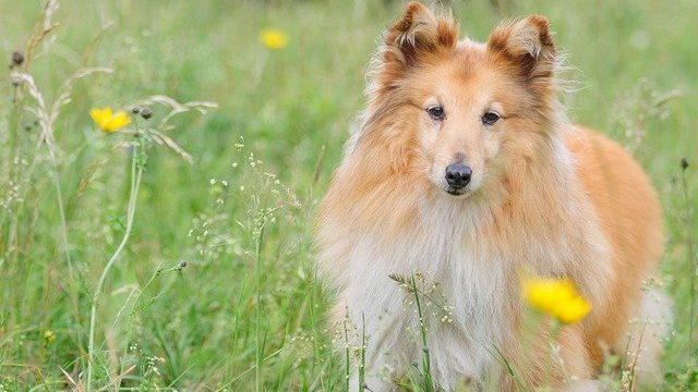 犬の高脂血症の予後