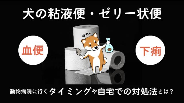 【犬が粘液便をした】動物病院に行くタイミングや自宅での対処法を解説