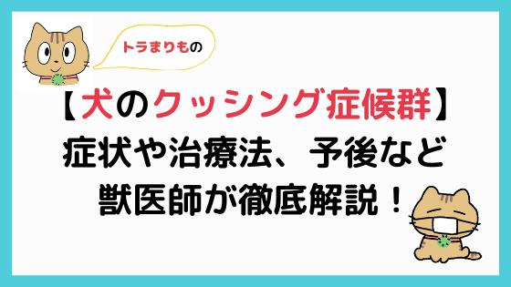 【犬のクッシング症候群(副腎皮質機能亢進症)まとめ】獣医師が解説!