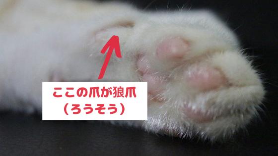 猫の爪は爪とぎをしていれば伸びない