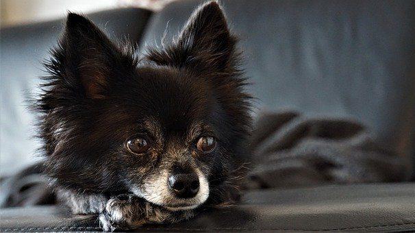 犬の毛が生えない場合は病気の時もある