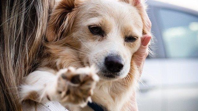 ほめられて抱っこされる犬