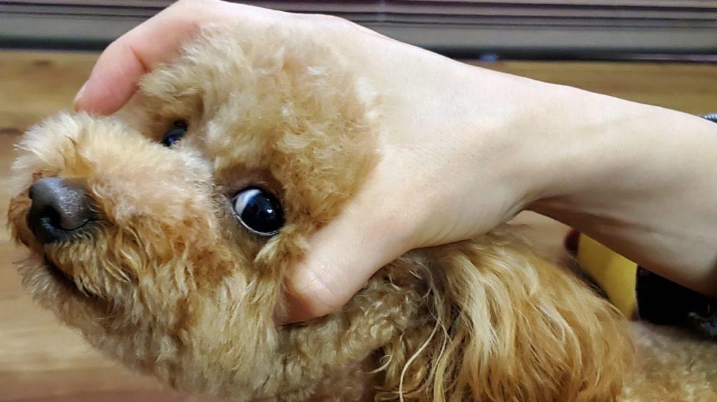 くすりと犬1