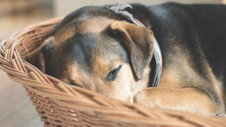 犬が何となく元気がないときに見るべき5つのポイント