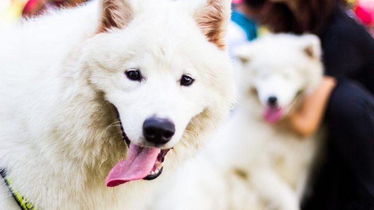 犬がハアハアしている「病気ではないとき」の原因4つ