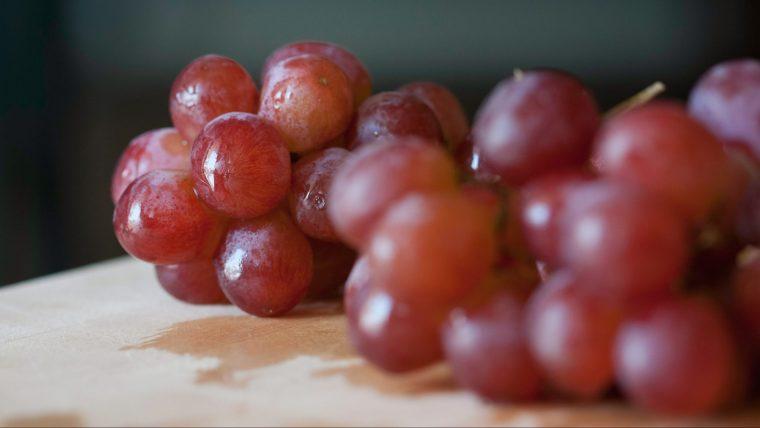 犬がブドウを食べると中毒を起こす【食べたらダメ!】