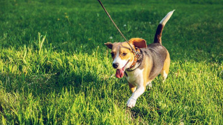 犬 甲状腺機能低下症