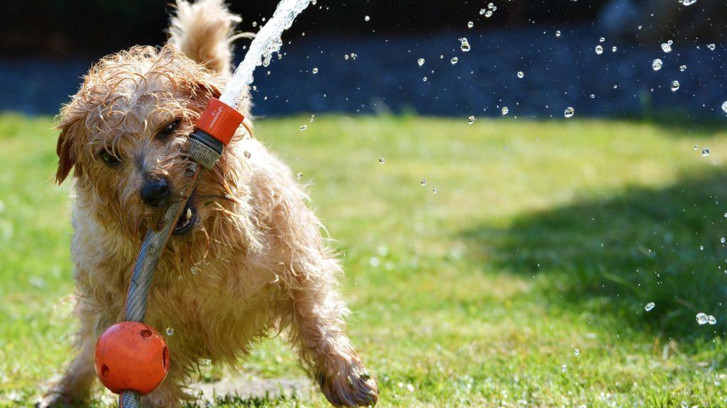 水で遊ぶ犬