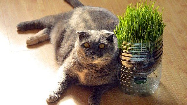 避妊手術後の肥満の猫