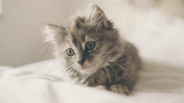 そもそも猫の避妊手術はするべきなのか?