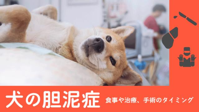 【犬の胆泥症】治療法や手術のタイミングなど3つのポイントを解説!