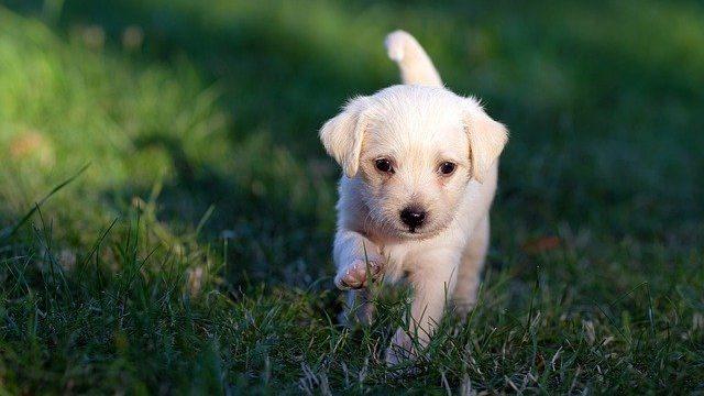 ノミダニ予防をしている犬