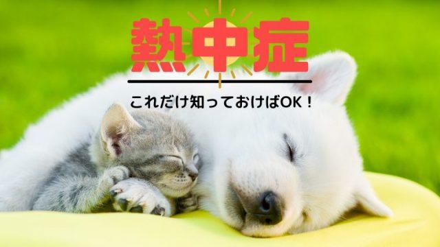【犬と猫の熱中症】症状や治療、対策法を獣医師が全部教えます!