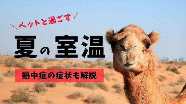 【犬や猫の熱中症】原因や症状、夏場のオススメ室温を獣医師が解説!