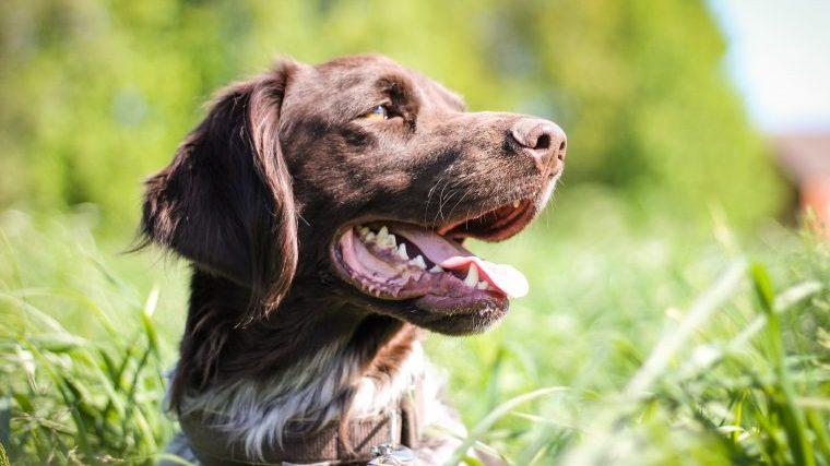 【犬の熱中症】原因や症状、夏場の快適な室温を獣医師が解説!