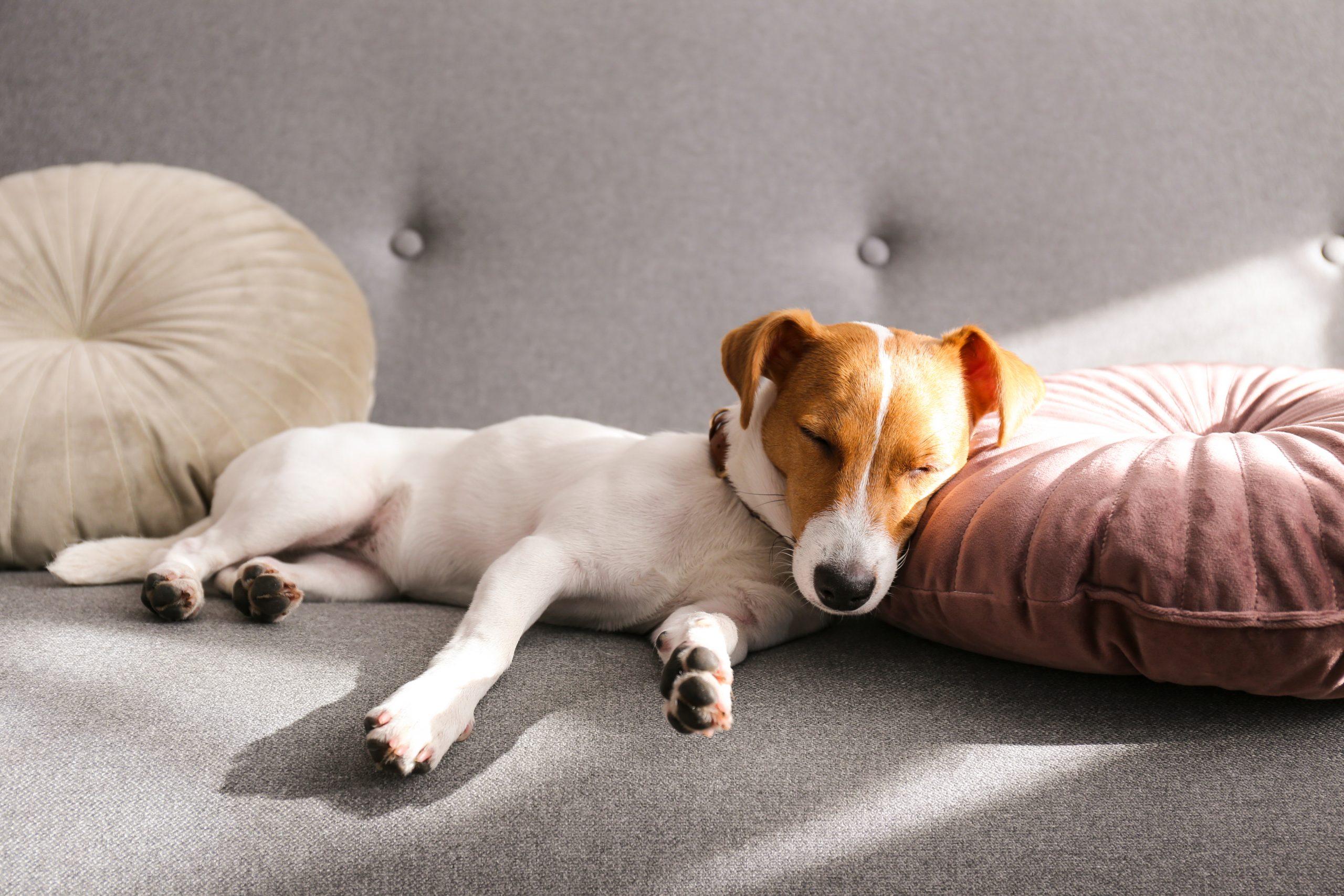 犬や猫が熱中症になると、どんな症状が出るの?