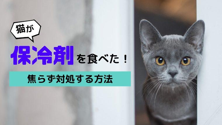 【猫が保冷剤を食べた!】致死量や症状、対処法などを獣医師が徹底解説!