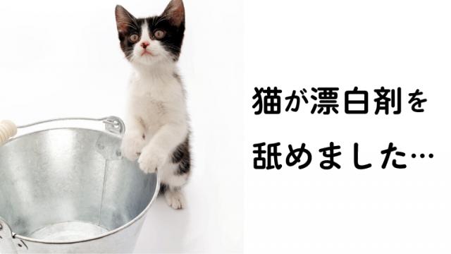 「猫が漂白剤を舐めた!?」症状や自宅での対処法を獣医師が解説!