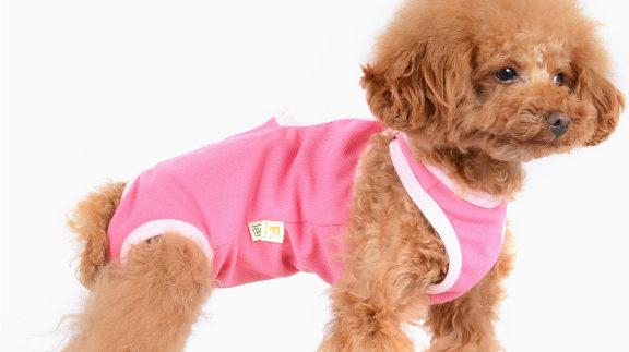 犬の手術後の服