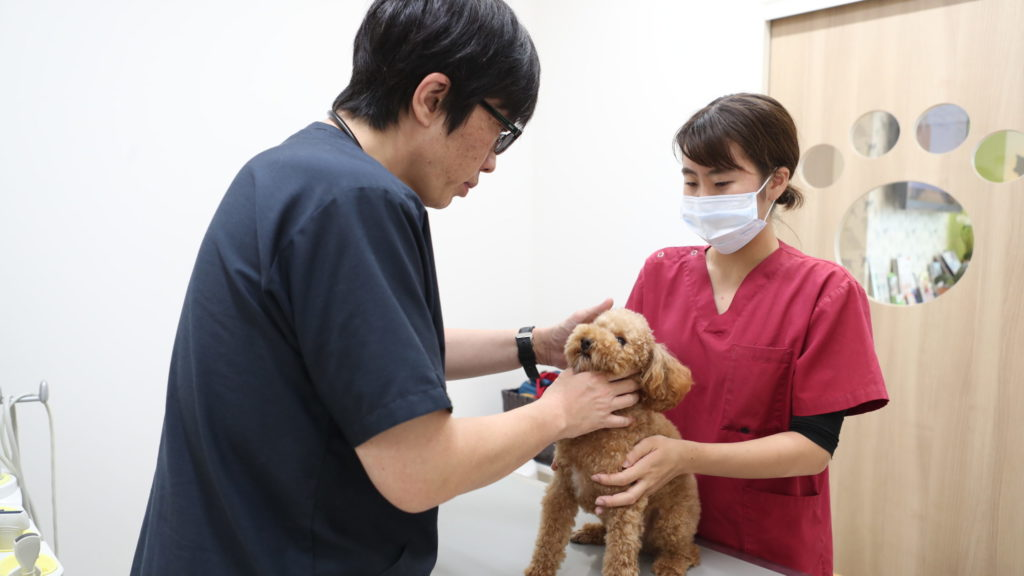 トラまりまりも動物病院ものまり