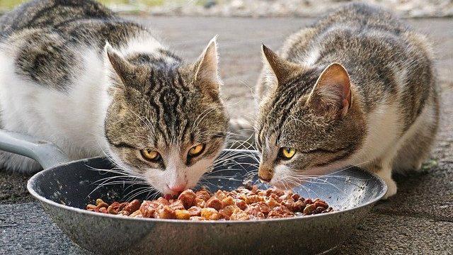 エサを食べている猫