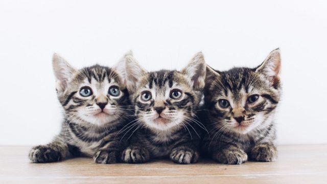 子猫がエサを食べないときの10つの解決策