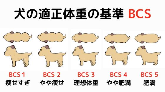 【図解で簡単】犬の適正体重にはBCSという評価基準がある