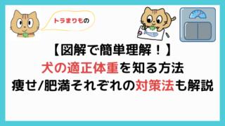 【簡単】犬の適正体重を知る方法【BCSという指標で健康に過ごす】