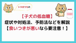 【子犬の低血糖】症状や自宅での対処法、予防する方法を獣医師が解説!