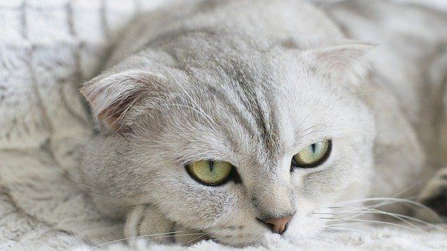 猫の尿管結石の原因