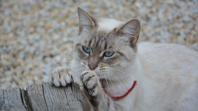 猫の爪を切らないとどうなる?