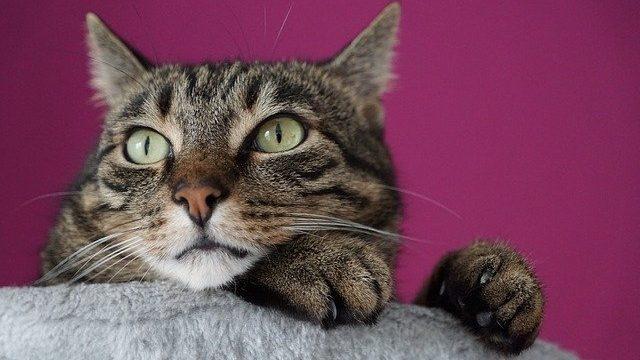 【簡単】猫の爪の切り方3つのポイント