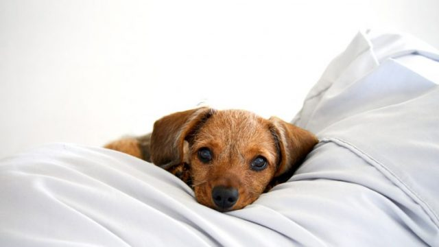犬の急性膵炎はある日突然に【獣医師が症状や治療法などを徹底解説!】