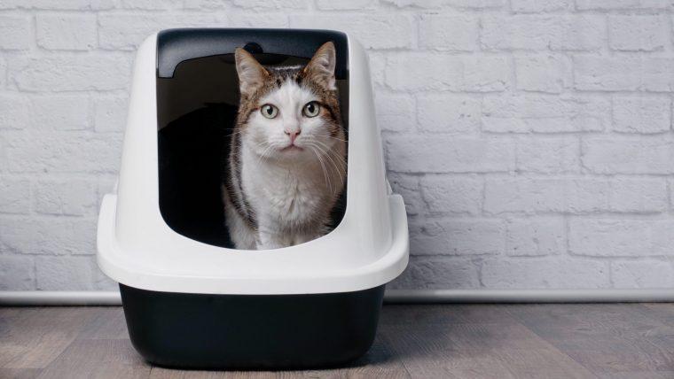 【簡単】自宅でできる猫の採尿~3つの方法