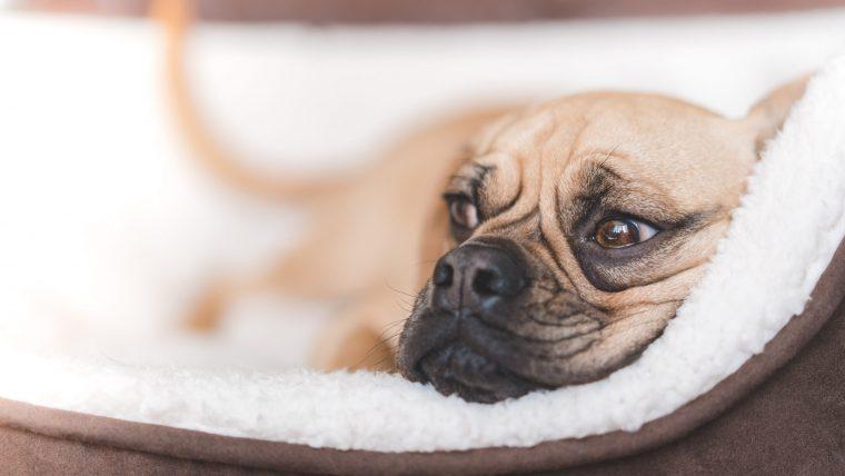 犬の下痢の原因はたくさんある