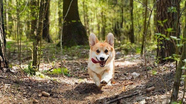 犬の日光浴の必要性