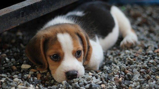 犬の低血糖症を予防するためには?