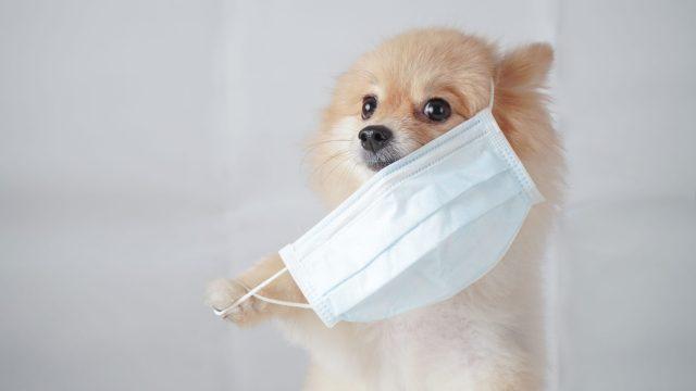 犬のマスクの誤食はとても多い!