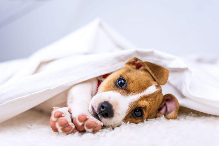 犬がくしゃみをするとき自宅でできること