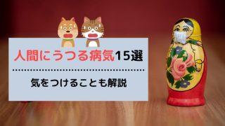 【まとめ】犬や猫から人間にうつる病気15選【家庭での対策も解説!】