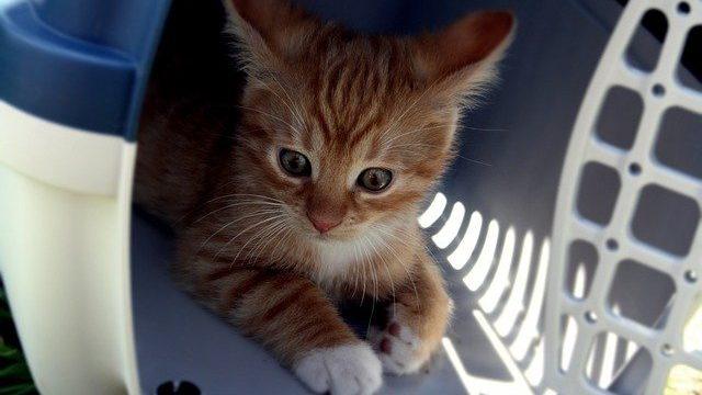 子猫はいつもケージに入れておいた方がいいの?
