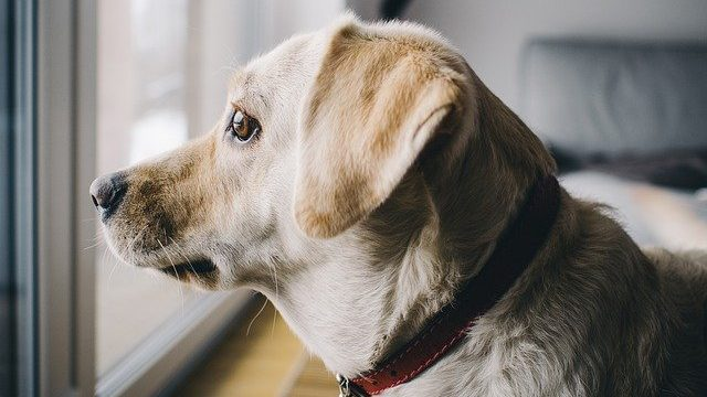 犬の分離不安とはストレス反応
