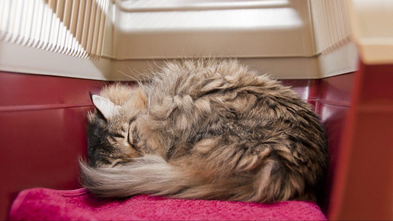 猫の膵炎の原因は不明