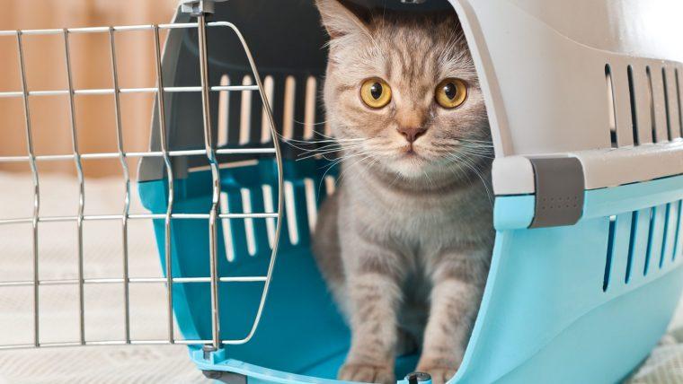 子猫へのクレート(ケージ)の教え方3ステップ