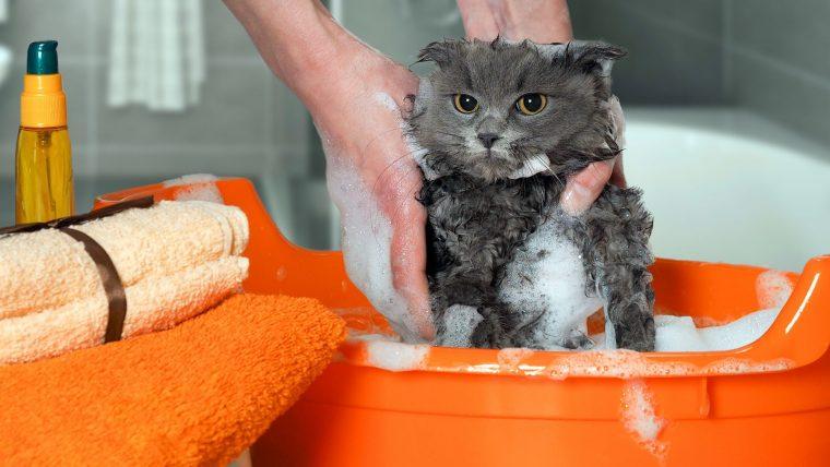 猫のシャンプーは動物病院で行うと安心!