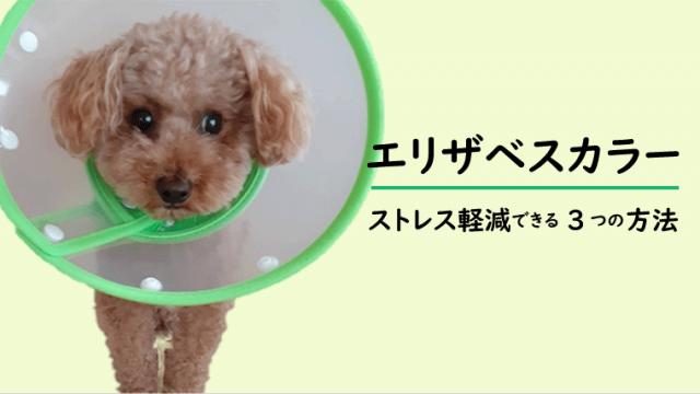 【犬のエリザベスカラー】ストレス軽減できる3つの方法【嫌がらないぶつからない!】