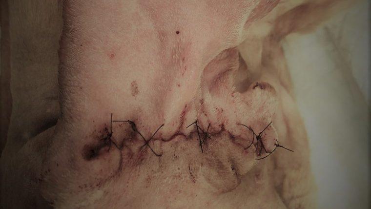 以下で手術の写真が出ますので(ぼやかす処理をしています)苦手な方はお戻りください。